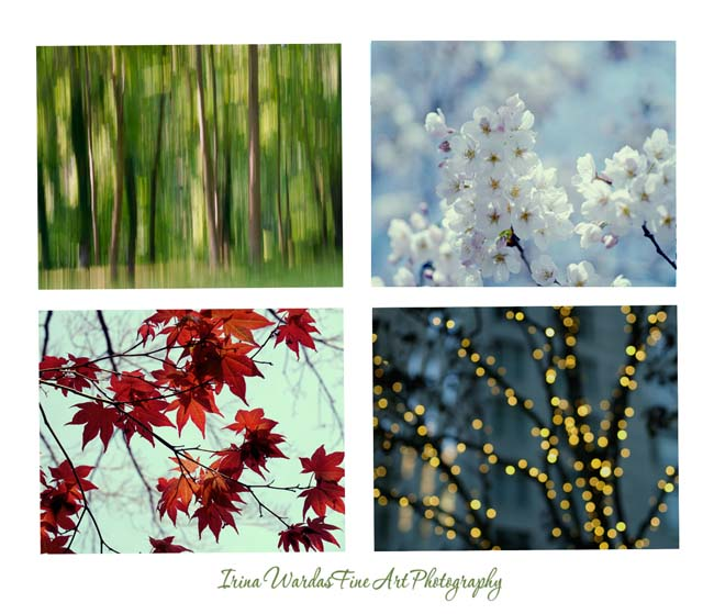 seasonal tree photography