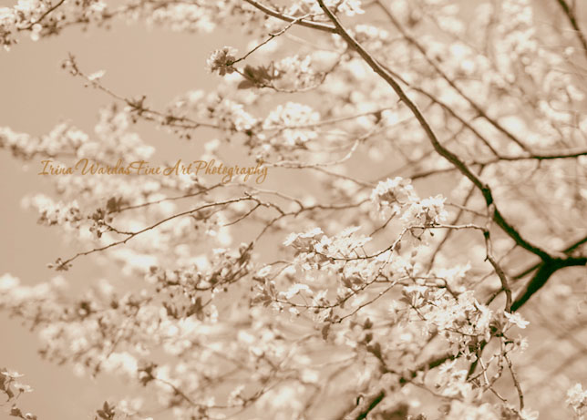 tree branch photography art
