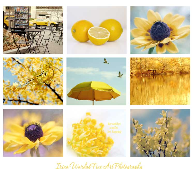 Yellow Photography