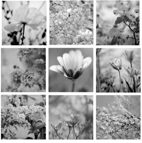 botanical print set