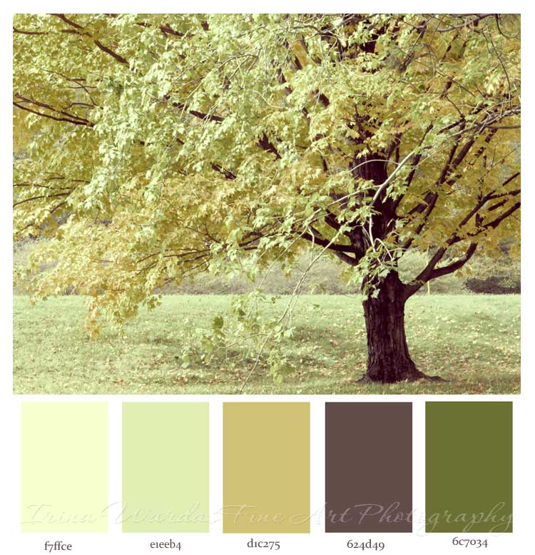 zen colors for your home decor