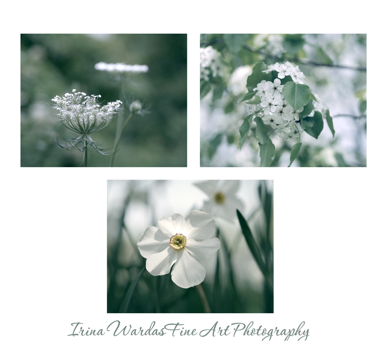 green and white photography _blog