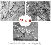 Grey wall art nature photography set of 3, black and white office pictures 8x10 wall art prints, botanical light pale bathroom bedroom decor