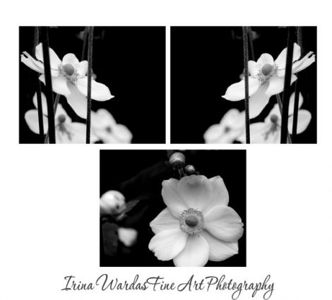Black and white photography set, 3 flower photographs, floral art photos, Anemone pictures, modern art prints, symmetrical art, black decor