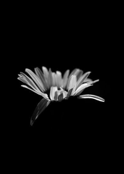 Black wall art, minimalist print modern photography black and white flower, vertical wall decor, dark art, light shadow modern floral print