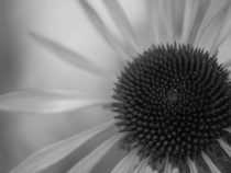 Black and white floral photography, modern floral art, grey flower picture, flower wall print, floral abstract, dark grey modern photograph