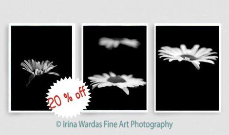 Modern black wall art decor, minimalist art, vertical floral art set, black and white photography set of 3 photo prints, white daisy flower
