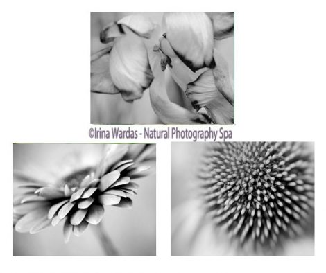 Grey photography flower photo prints, grey wall art set, modern print set of 3 11x14, 8x10 floral pictures grey wall decor, black and white