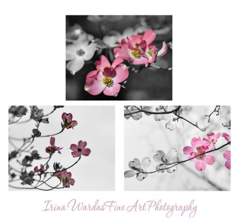 Grey and pinkg wall art modern photography set, flower photo print set, 3 floral pictures 11x14, baby girl room nursery decor, bathroom art