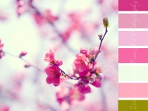 color palette for home decor