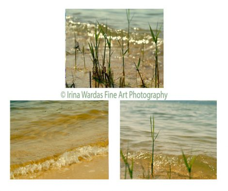 Beach photography set, lake photography, water art, beach grass, nautical prints, bathroom beach art cottage wall decor, green ochre yellow