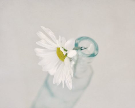 Bath room decor, bathroom art, still life daisy photograph, powder room flower print 8x10, grey white teal cottage wall art neutral artwork