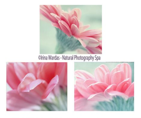 Pink & mint flower photography set, gerbera daisies 8x10 11x14 floral art prints, 3 piece wall art nature botanical photo set, coral teal