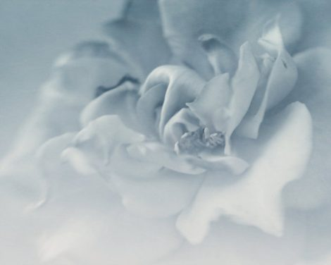 Grey wall decor flower photography, modern artwork surreal art, neutral abstract art minimalist pale grey floral art print, light blue gray