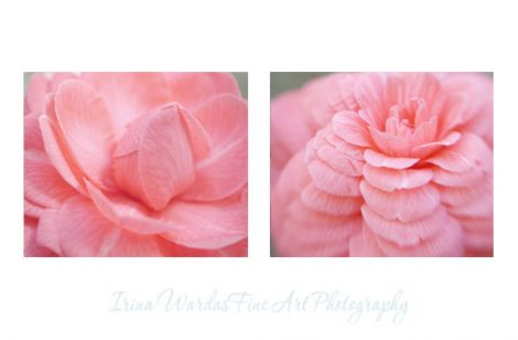 Modern flower photography, coral pink wall art set of 2 floral prints, Camellia flower artwork, gallery wall set, pastel bedroom wall art