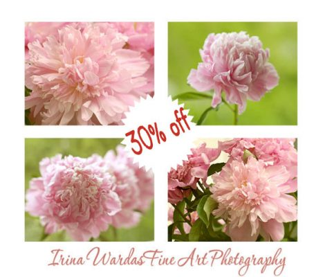 Peony wall art set, peonies prints, green pink photography set of 4, cottage chic art, 8x10 peony pictures, salmon pink peony bouquet, mauve