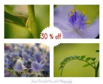 Gallery wall set of 4 nature prints, macro photographs, botanical, lavender green modern wall art flower stamens, Summer Spring, blue violet