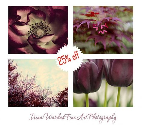 Red purple photo set, 4 11x14, 8x10 nature photographs, botanical wall art, burgundy wall art decor modern fine art prints, maroon ruby mint