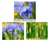 Blue and green gallery wall set, nature photography set 3 11x14 botanical photos, art for living room, modern wall art decor, yellow indigo