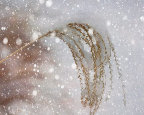 Winter nature photography, winter grass picture, snow photography, neutral wall art, beige grey white winter decor, snowflakes photo print