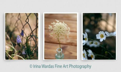 Rustic wall art set of 3 pictures, floral photography set, country chic nature photos, green gold brown farmhouse decor, 3 piece wall art