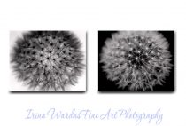 Wall art black and white canvas 2 piece set, modern floral abstract, dandelion canvas art, contemporary minimalist art, living room decor