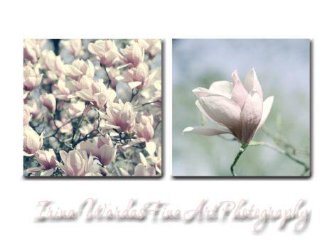 Magnolias wall art, floral canvas art, 2 16x16, 20x20 Magnolia canvas wraps, large wall art, pale dusty pink flower canvas set, bedroom art
