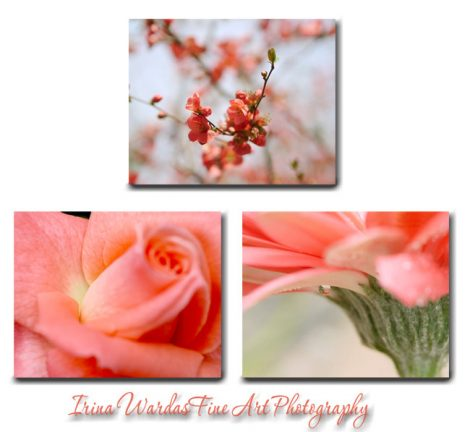 Canvas art flower photography coral wall art set, 3 floral canvas prints, cottage chic coral decor, large modern art, living room, bedroom