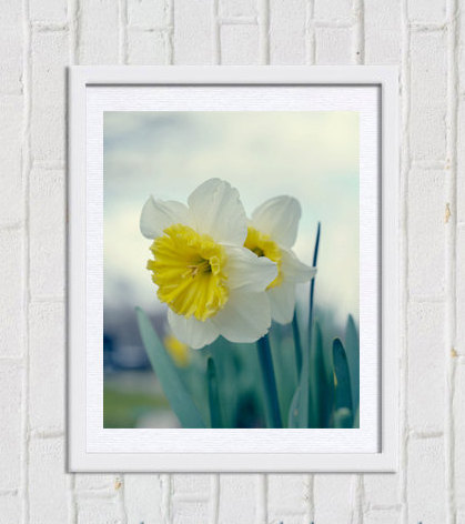 White yellow flower photography, aqua teal wall art, vertical nature print, daffodil art picture, botanical photo, girls room spring decor