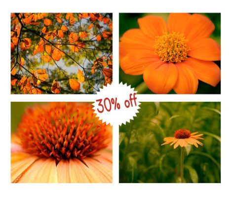 Orange wall art set, 4 floral art pictures nature photography 8x10 botanical print set, orange and green gallery wall set, living room decor