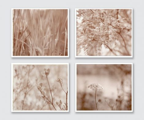 Beige wall decor, neutral wall art modern nature photography set of 4 beige pictures, beige tan wall set botanical photos, light brown cream