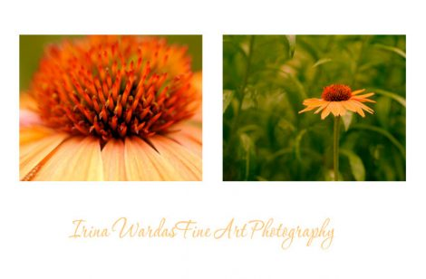 Modern floral photography set of 2 prints 11x14, orange yellow flower pictures, floral wall art, botanical photos, coneflower art red green