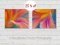 Floral abstract photography set of 2 prints, flower artwork modern floral wall art set, burnt orange purple wall decor, yellow teal green