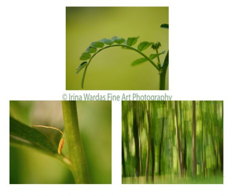 Abstract photography set of 3, modern art prints, nature pictures, green wall art set, botanical abstract, green gallery wall, brown. lime