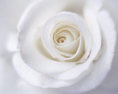 Rose print, flower photography, white wall art, powder room, white bathroom decor, modern artwork, floral art print, white rose neutrlal art