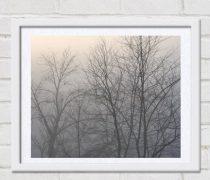 Minimalist art, winter tree photography, trees in fog, grey wall art neutral art print, nature photo print, bare branches, modern wall decor
