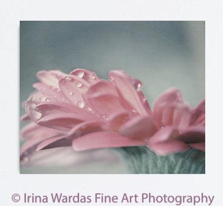 Dusty pink flower artwork floral canvas wrap flower canvas wall art Gerbera daisy, large bedroom art modern canvas art, dew drops, teal grey
