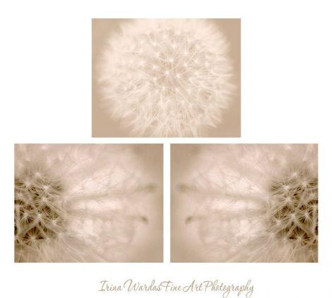 Dandelion artwork, dandelion photography set, 3 11x14, 8x10 pictures, beige wall art, tan neutral decor dandelion abstract art prints modern