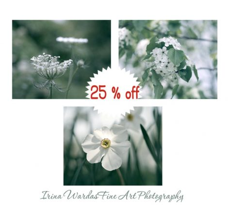Photography, nature set of prints, green and white wall decor art prints, green wall art white flowers botanical photos, girls room pictures
