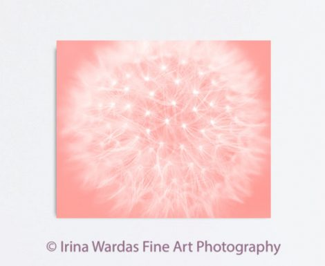 Dandelion photography large gallery wrapped canvas, dandelion art abstract floral artwork, nursery room wall art, bedroom pink peach decor