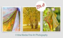 Modern photography set 3 botanical print 11x14, 8x10 tree leaf artwork, living room green yellow nature tryptich 3 piece wall art, abstract