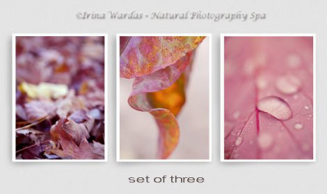 3 piece wall art, red leaf abstract art print set, modern photography, vertical wall pictures, nature photo prints, amaranth purple orange