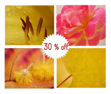 Gallery wall art, botanical photography set of 4 art prints 8x10 macro photography, mustard yellow wall art, magenta pink nature wall decor