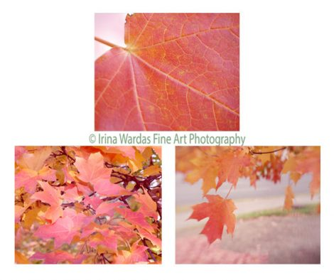 Coral wall art tree leaves pictures, nature photography, botanical gallery wall print set, 3 piece wall art, pink peach living room decor