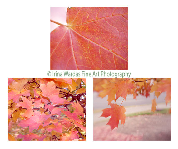 Coral Wall Art Tree Leaves Pictures, Nature Photography, Botanical Gallery  Wall Print Set,