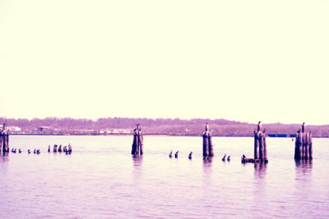 Lake photography yellow purple wall art, lake house decor, old wharf post birds, coastal landscape fine art print 12x18, 16x24 nautical art