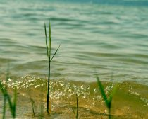 Lake photography, water ripples picture, lake beach grass, ocean photography, coastal nature art, lake house decor, teal green gold wall art