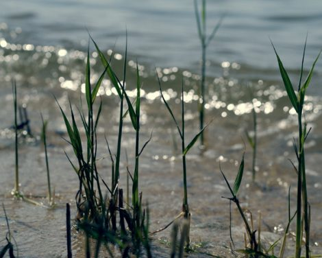 Seashore photo, grey teal art lake photograph, modern beach art green grass print water sparkles, coastal nature, nautical lake house decor