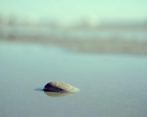 Mint beach wall art minimalist photo, seashore picture seashell print, coastal photography mint nautical decor, beige aqua bathroom wall art
