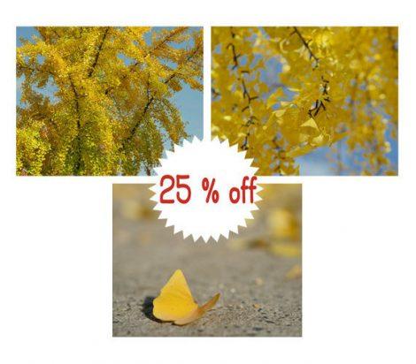 Photography, Autumn print set of 3 ginkgo biloba tree leaves 11x14, 8x10 yellow wall art set, nature gallery wall prints, fall wall decor